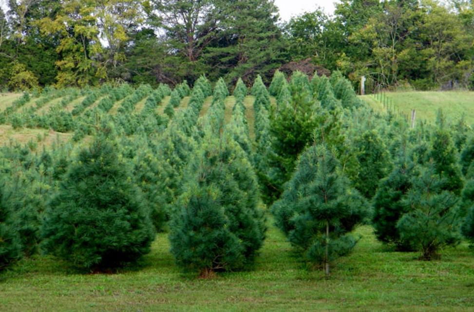 Christmas Dress Trees